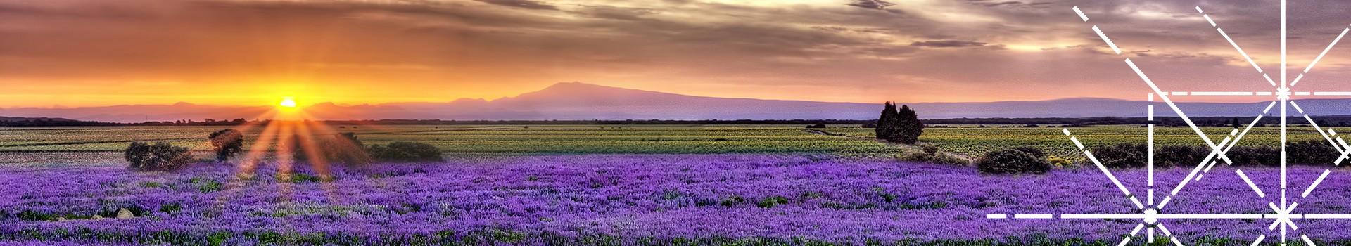 coucher-de-soleil-lavandes-vignes-95