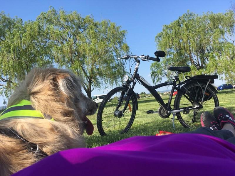 Label Accueil Vélo chien